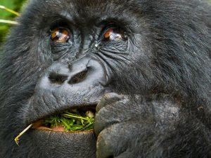 Gorilla Trekking Tours -